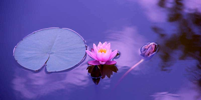 por que aprender a meditar